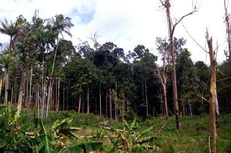 KD fallow forest